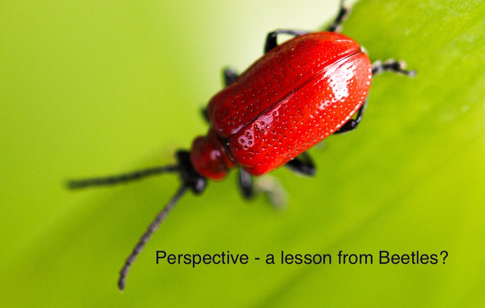 Ahh – Yes!  Perspective from Beetles?